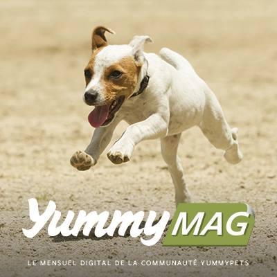 yummymag chien