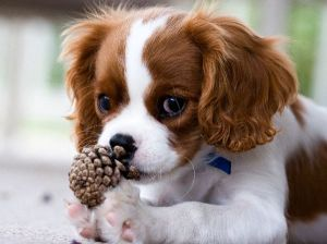 puppyband.com